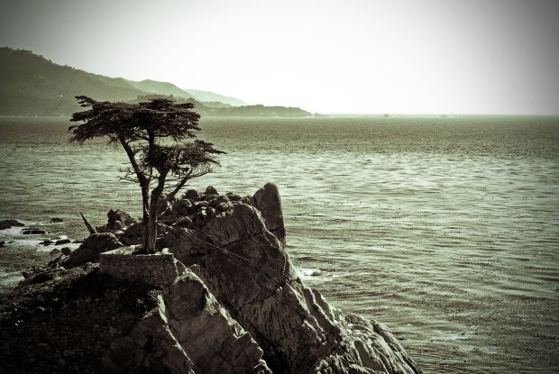 The Lone Cypress Tree in Monterey