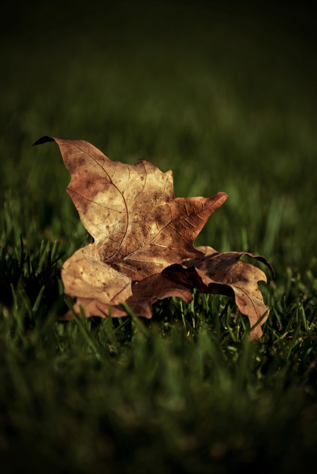 Lonely Leaf