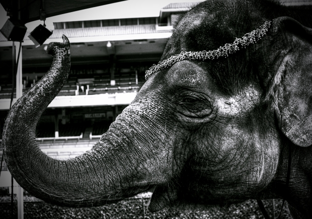 The Elephant #1 - Monochrome
